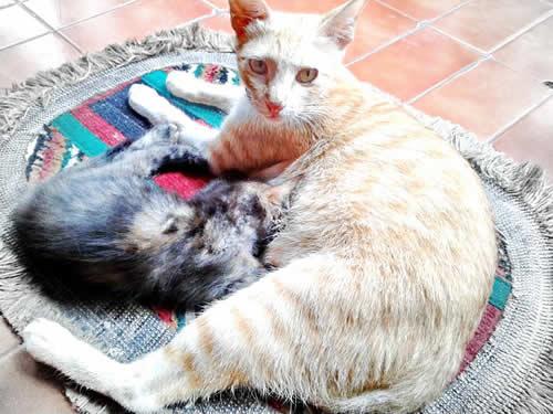 induk kucing menyusui anaknya