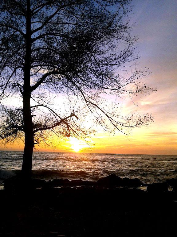 siluet pohon di pantai meulaboh