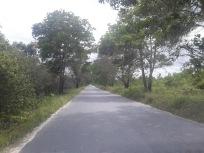 road in pangkalanbun