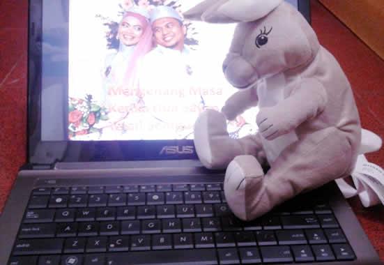 bonek kelinci