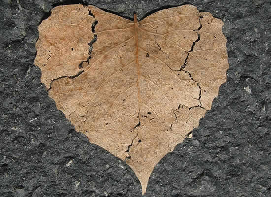 broken heart leave