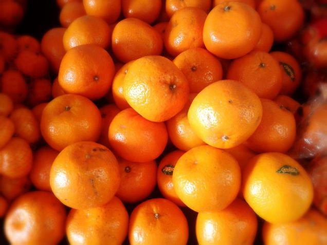 orange - fruit 1