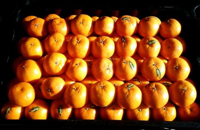 orange - fruit 2