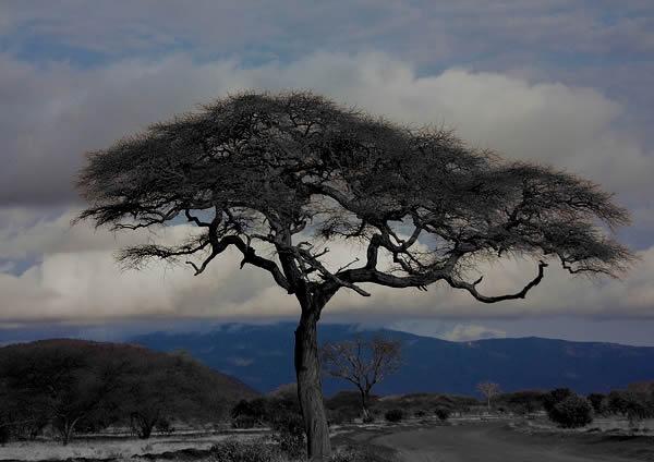 pohon tree