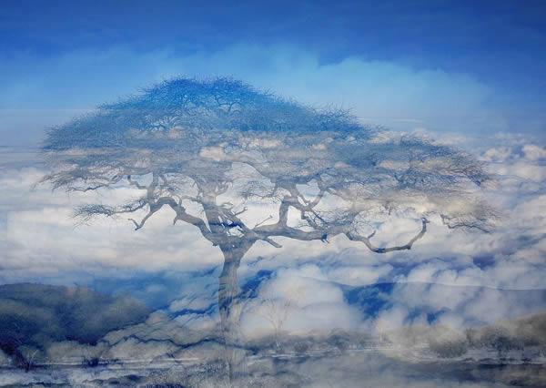 pohon di atas awan