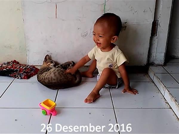 sabiq bermain bersama kucing