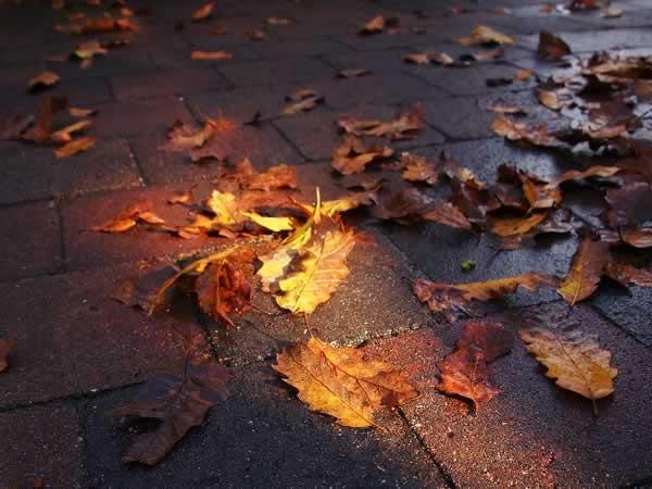 daun berserakan