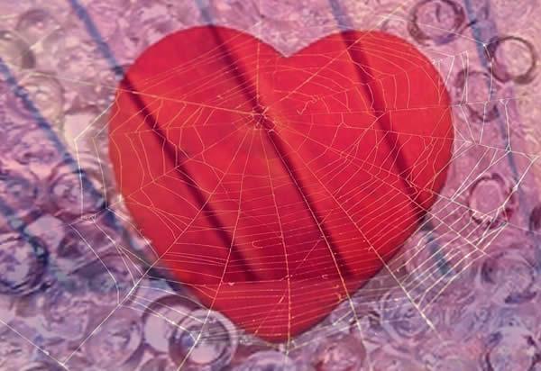 hati dan laba-laba