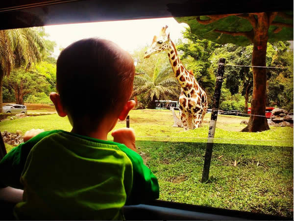 sabiq-di-taman-safari